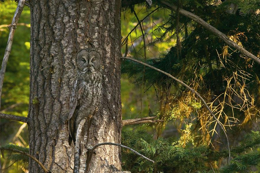 animal camouflage photography art wolfe 1 - Hidden Animals Photos That You Can</div></div></div></div></div><div class=