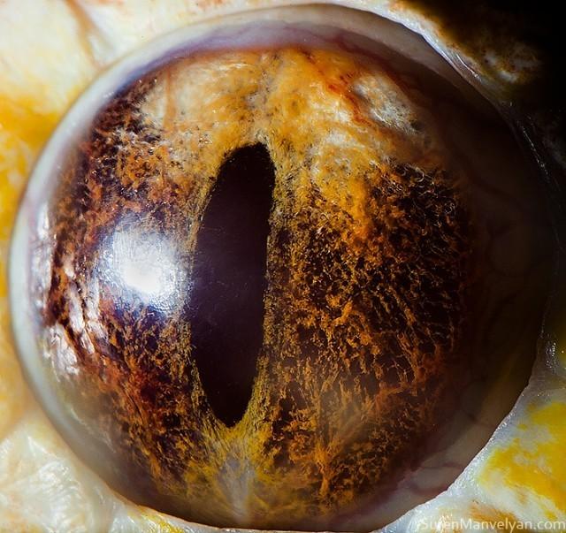 75 e1402418133926 - Macro Photography Of Animal Eyes </div> </div> </div> </div> </div> <div class=