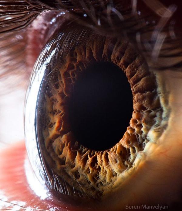 Beautiful Macro Photography Of Human And Animals Eyes
